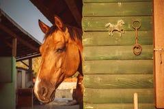 马Head.Horse农场,尼斯干净的马稳定 图库摄影
