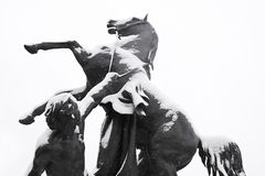 驯服马 免版税库存照片