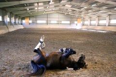 驯马获得乐趣在车手大厅 免版税库存图片