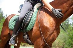 驯马马 免版税库存图片