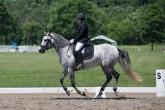 驯马USEF训练水平测试2 免版税库存照片
