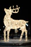 驯鹿圣诞灯 免版税库存图片
