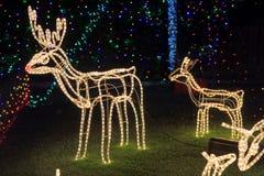 驯鹿圣诞节装饰明亮的光 库存照片