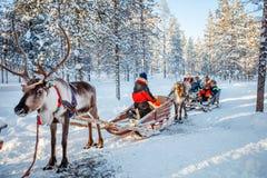 驯鹿徒步旅行队 免版税库存图片
