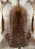 驯鹿毛皮纹理 库存照片