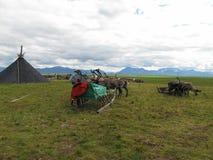 驯鹿牧民驻地在寒带草原 图库摄影
