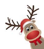 驯鹿红色鼻子围巾圣诞老人帽子 图库摄影