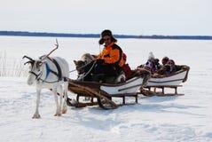 驯鹿骑马在芬兰 库存图片