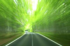 驱动森林 库存图片