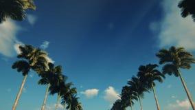 驱动通过棕榈树胡同,底视图 股票录像