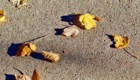 驱散在边路的秋叶 库存照片