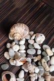驱散壳和小卵石 库存图片