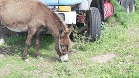 驴嚼在山的草 股票录像