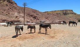 驴在荒废村庄 库存照片