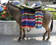 驴墨西哥 免版税库存图片