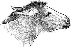 驴头的剪影 向量例证