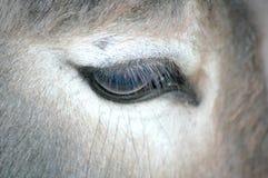驴眼睛 免版税库存照片