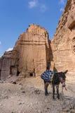 驴等待的游人在古城Petra,约旦 免版税库存照片