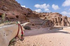 驴等待的游人在古城Petra,约旦 免版税图库摄影