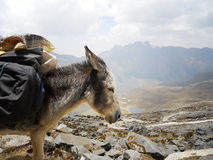 驴负荷 免版税图库摄影