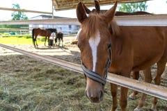 驹关闭在一支笔和站立在一匹马后在被弄脏的背景中 免版税库存图片
