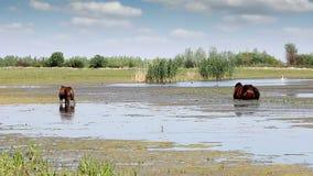 驹和马吃草 股票录像