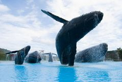 驼背雕象鲸鱼 库存照片