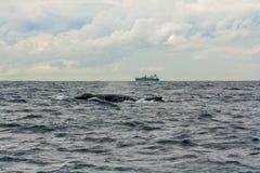 驼背鲸和货船 库存图片