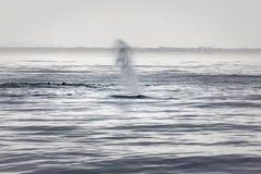 驼背鲸喷口 免版税图库摄影