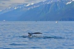 驼背鲸尾标 免版税库存照片