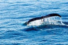 驼背鲸潜水-显示放出在尾巴的水 免版税库存图片