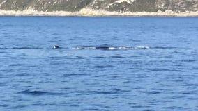 驼背鲸 股票视频