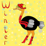 驼鸟为什么在冬天是很冷的? 免版税库存照片