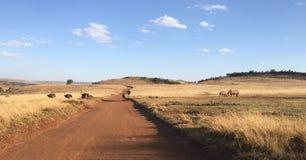 驼鸟和犀牛 免版税库存照片