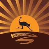 驼鸟在阳光下 免版税库存照片