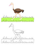 驼鸟的O 库存照片