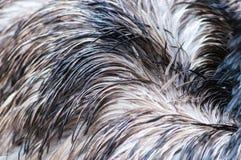 驼鸟羽毛背景 免版税库存照片