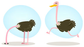 驼鸟运行的和隐藏的题头 免版税库存照片