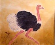 驼鸟,不能飞的鸟黑色胆怯 免版税库存照片