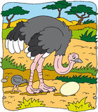 驼鸟 向量例证