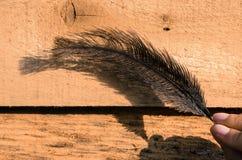 驼鸟feader 免版税库存照片