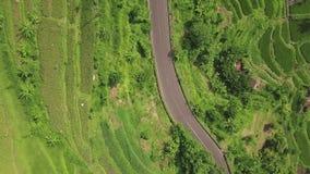 驾车在路在绿色米领域风景的亚洲村庄 寄生虫视图增长的米种植园和汽车路  股票录像