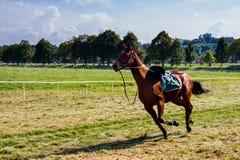 轻驾车赛用马舍入三轮的跑马 库存图片