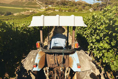 驾驶一台拖拉机的农夫在葡萄园里 免版税库存照片