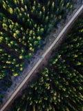 驾驶到森林 免版税库存照片