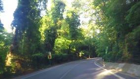驾驶在森林公路 股票录像