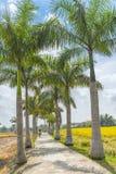 驾驶在路的农夫种植了树古巴鲜亮的棕榈 免版税库存图片