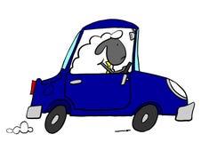 驾驶汽车的办公室绵羊 免版税库存照片