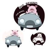 驾驶汽车的猪 库存图片
