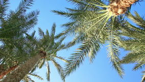 驾驶通过在贝弗利驱动的棕榈树 股票录像